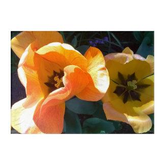 Cream Orange Hybrid Tulip Acrylic Wall Art