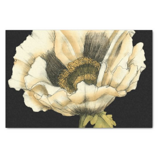 Cream Poppy Flower on Black Background Tissue Paper