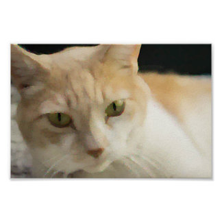 Cream Tabby Cat Value Poster