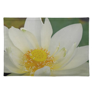 Cream Water Lily02.JPG Placemat
