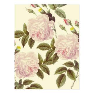 Creamy Rose Dream Postcard