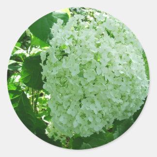Creamy White Annabelle Hydrangea Flower Stickers