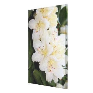 Creamy White Floral Canvas Print