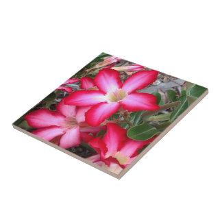 Create your own square tile -  Desert Rose