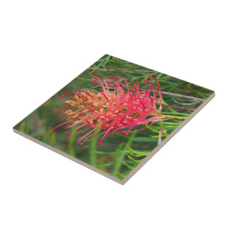 Create your own square tile -  Grevillea