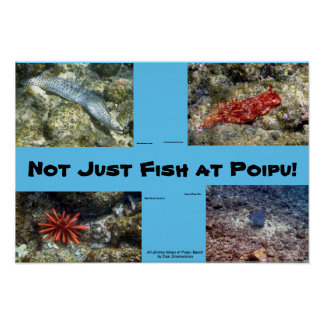 Creatures at Poipu Beach Poster