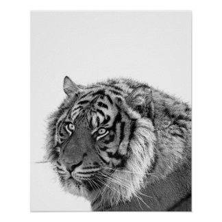Crèche noire et blanche de photo d'animal sauvage poster