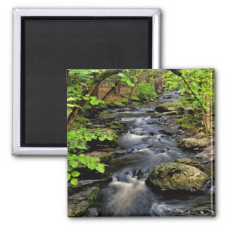 Creek flows through forest square magnet