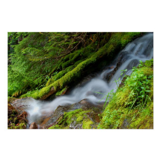 Creek in Mt. Rainier National Park Poster
