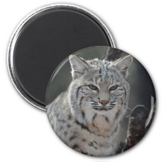 Creeping Bobcat 2 Inch Round Magnet