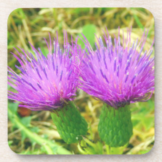 Creeping or Field Thistle Hard Plastic Coasters