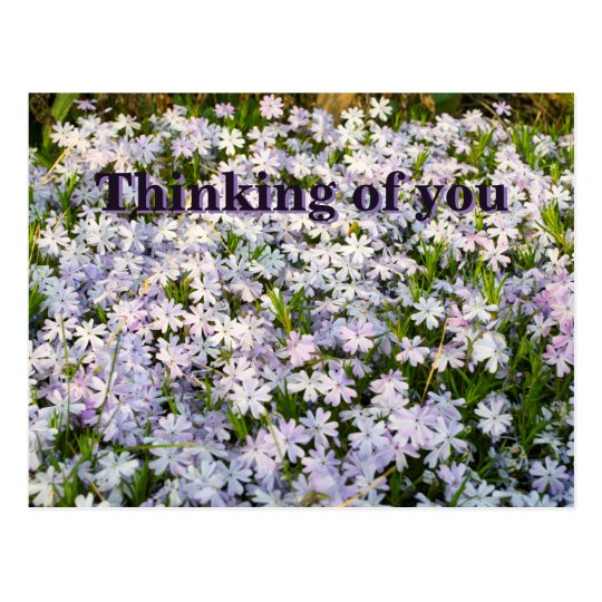 Creeping Phlox Flowers Postcard - with Custom Text