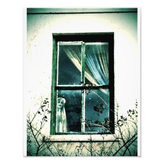 Creepy Savannah Window Photo Print