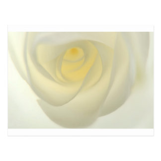 Creme Rose Eye Postcard