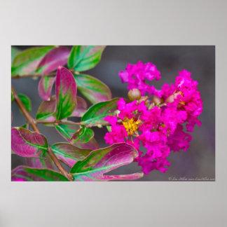 Crêpe le Myrte rose vibrante en affiche de fleur