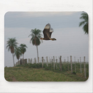 Crested Caracara in flight Mouse Pads
