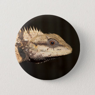 Crested forest lizard 2 inch round button