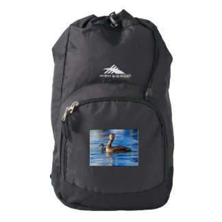 Crested grebe, podiceps cristatus, duck and baby backpack
