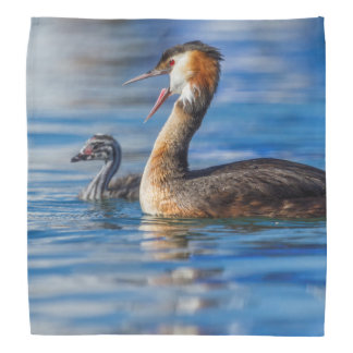 Crested grebe, podiceps cristatus, duck and baby bandana