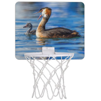 Crested grebe, podiceps cristatus, duck and baby mini basketball hoop
