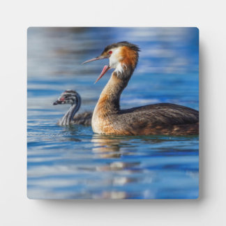 Crested grebe, podiceps cristatus, duck and baby plaque