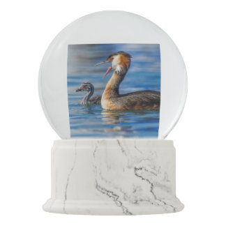 Crested grebe, podiceps cristatus, duck and baby snow globe