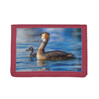 Crested grebe, podiceps cristatus, duck and baby trifold wallets