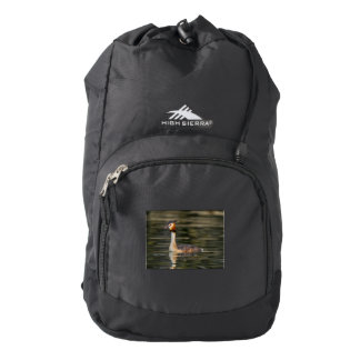 Crested grebe, podiceps cristatus, duck backpack