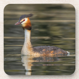 Crested grebe, podiceps cristatus, duck coaster