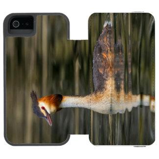 Crested grebe, podiceps cristatus, duck incipio watson™ iPhone 5 wallet case