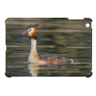 Crested grebe, podiceps cristatus, duck iPad mini cover
