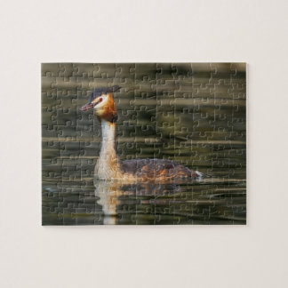 Crested grebe, podiceps cristatus, duck jigsaw puzzle