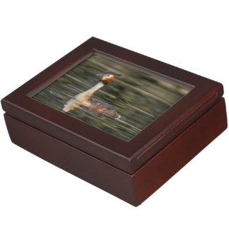 Crested grebe, podiceps cristatus, duck memory boxes