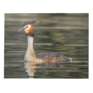 Crested grebe, podiceps cristatus, duck notepad