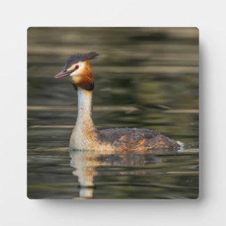 Crested grebe, podiceps cristatus, duck plaque
