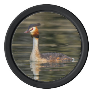Crested grebe, podiceps cristatus, duck poker chips