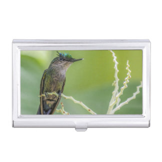 Crested Hummingbird Business Card Holder