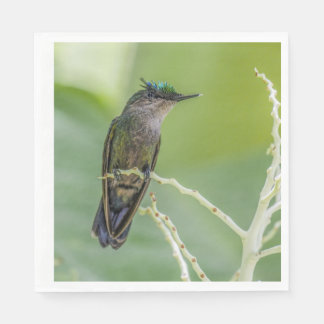 Crested Hummingbird Napkins Disposable Napkins