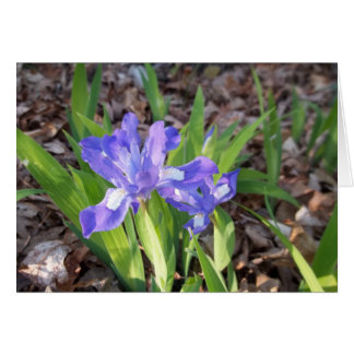 Crested Iris Card