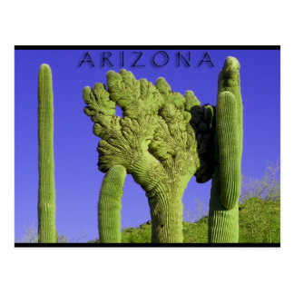 Crested Saguaro in Congress, Arizona Postcard
