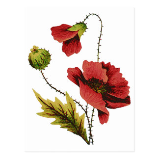 Crewel Embroidery Red Poppy Postcards
