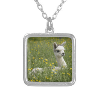 Cria In Buttercups Silver Plated Necklace