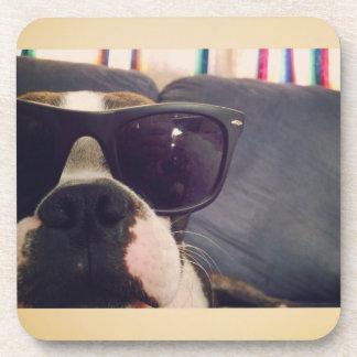 Crickett the Boston Terrier coasters