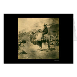 Crimean War Soldier on a Camel 1855 Greeting Card