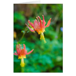 Crimson Columbine Greeting Card (Blank)