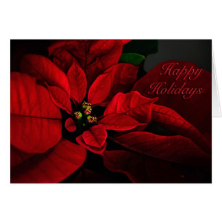 Crimson Red Poinsettia Happy Holidays Card