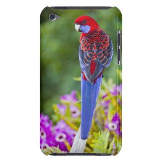 Crimson Rosella & backdrop of orchids Lamington iPod Touch Cover