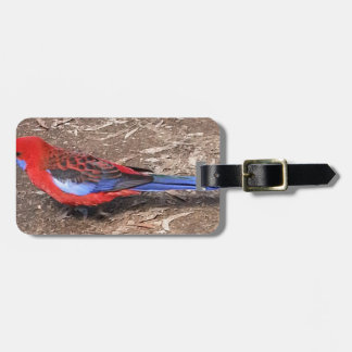 Crimson Rosella Luggage Tag
