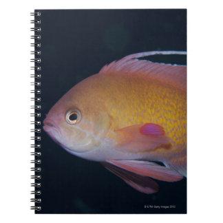 Crimson Seabream Spiral Notebooks