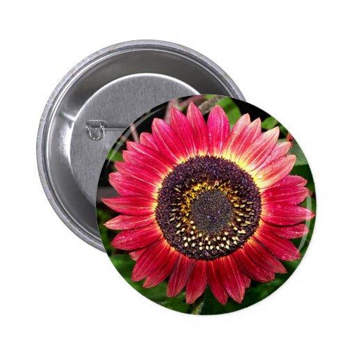 Crimson Sunflower Pinback Buttons